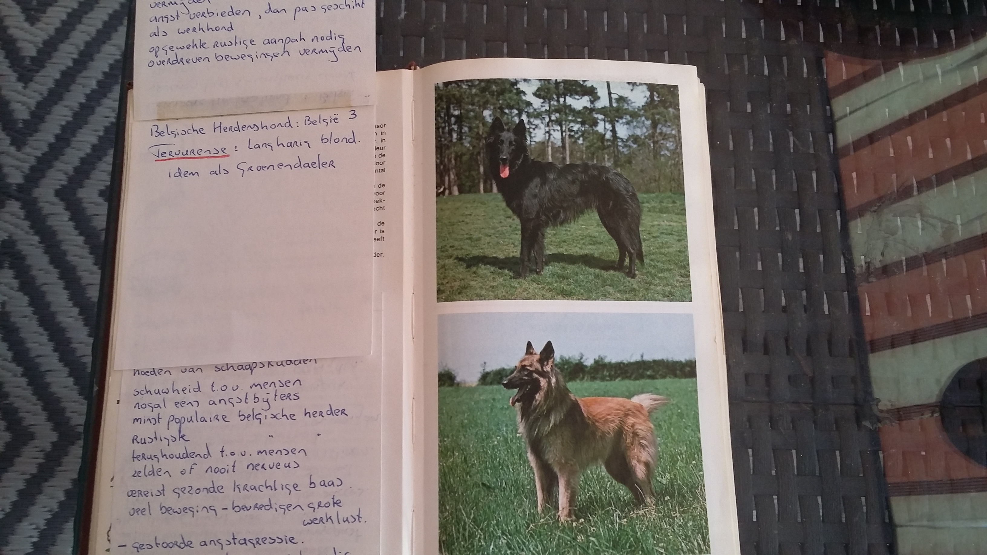 The most suitable dog breeds for children: | Blog di Doghelp by Theo